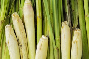 lemongrass-essential-oil-candleworks